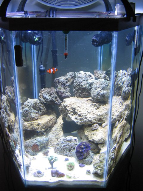 60 gallon hex reef tank update for 75 gallon fish tank dimensions
