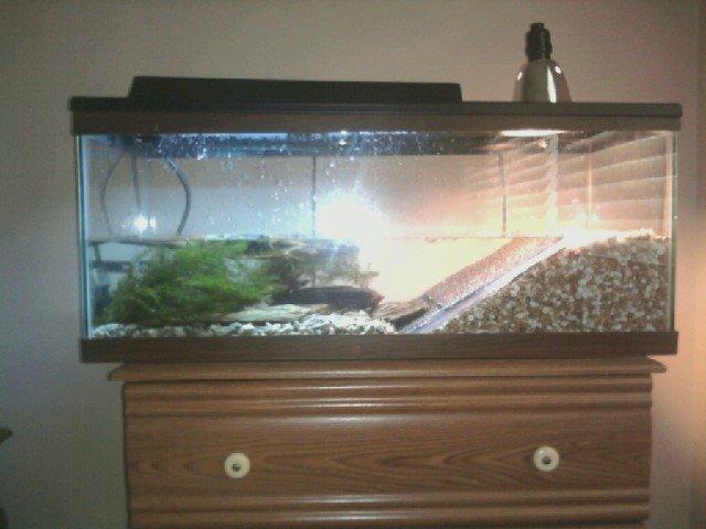 Show Off Your Tanks Aquariacentral Com