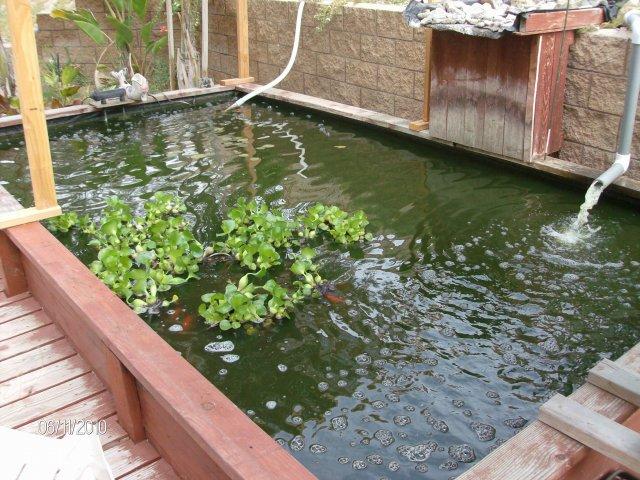 Above ground pond for Koi pond forum