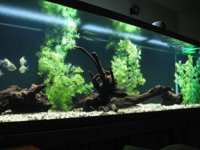 Here Is A Pic Of My Painted 180 Gallon