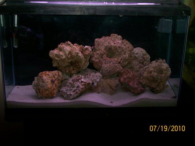 Amazoncom  Coralife Fish Tank LED BioCube Aquarium