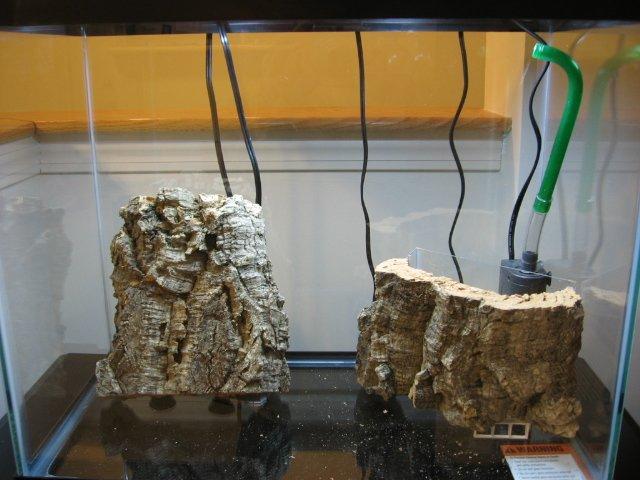 14g Cork Paludarium Photo Journal | AquariaCentral com