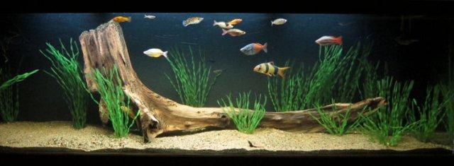 Beautiful Colorful Fish For Hard Water Aquarium