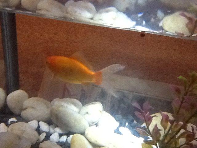 Orange Fishy.jpg