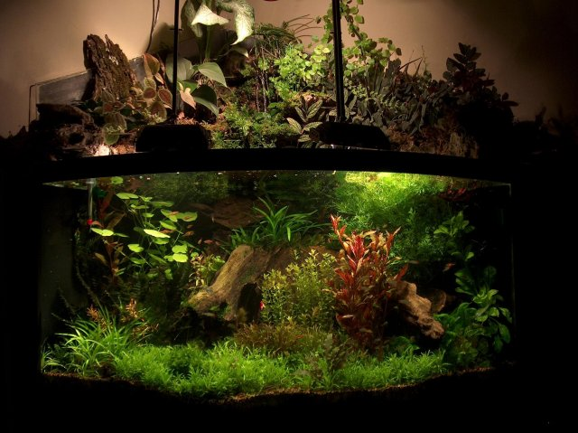 Paldarium vivarium i 39 m unsure but i think you 39 ll like for Waterfall fish tank