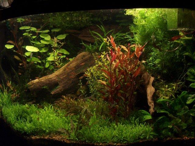 fish tank 236.jpg