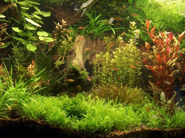 fish tank 222.jpg