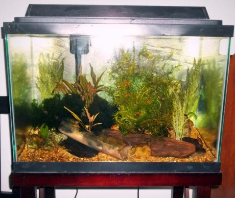 FS - 20 gallon full setup - Carmel stand, filter, hood