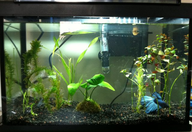 Betta tank needs some aquascaping yall | AquariaCentral.com