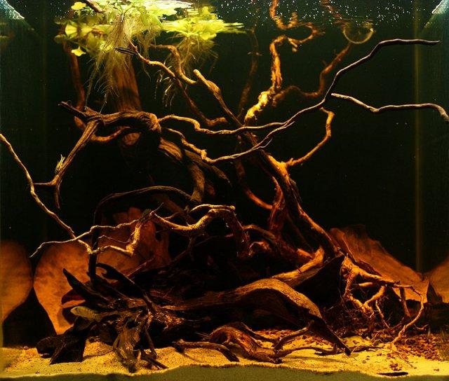 Rio Huallaga aquascape.jpg