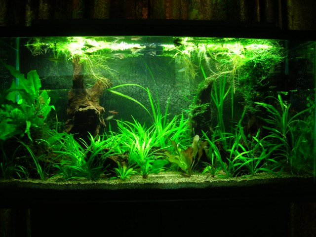 Easy, low tech planting suggestions for sand substrate