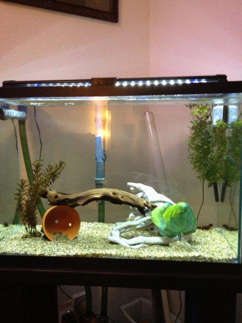 Fs 20 gallon aquarium with tank stand eheim thermo for 20 gallon fish tank filter