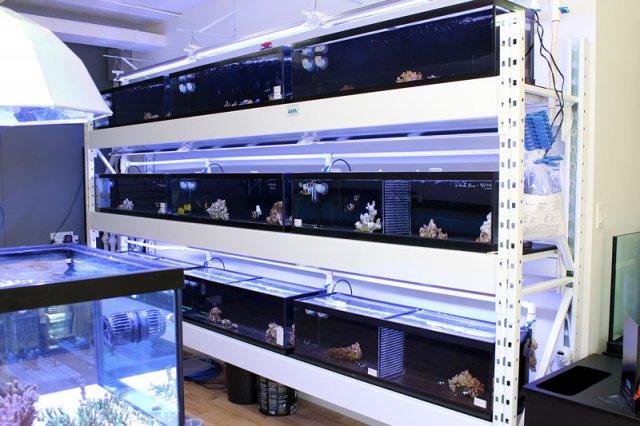 shop-coral-tanks6.jpg
