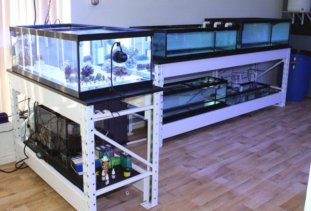 shop-coral-tanks1.jpg
