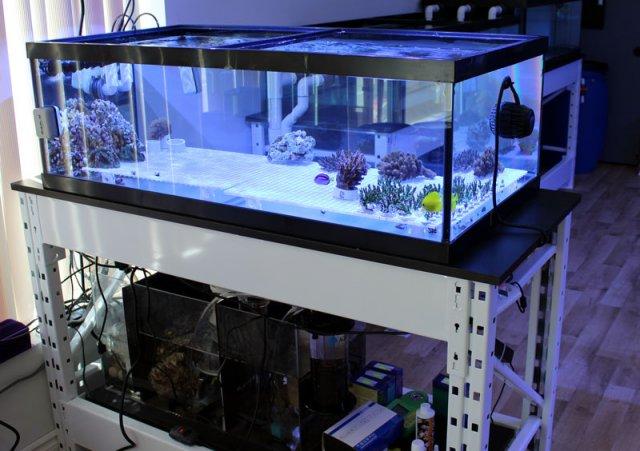shop-coral-tanks3.jpg