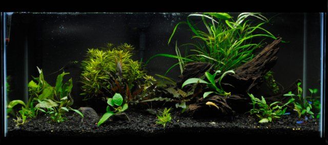 Cool stocking and equipment ideas for 33g for Black sand fish tank