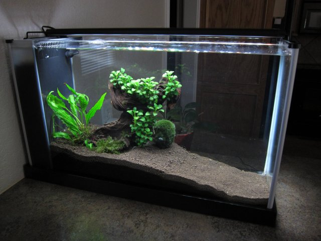 Best All In One Nano Tank Aquariacentral Com