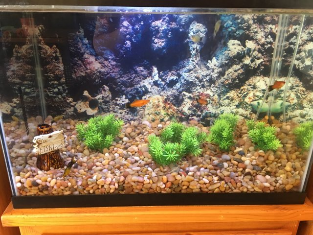 Jelly Like Blobs at bottom of tank!?! help!! | AquariaCentral com