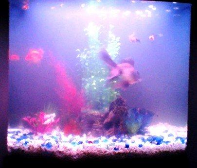 2020-01-17 fish tank.JPG