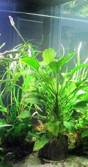 soloplantflower.jpg