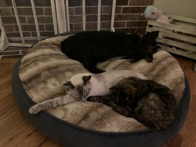 Cats and Dogs living together 2.JPG