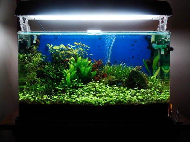 Skillful S Tanks Evolution Aquariacentral Com