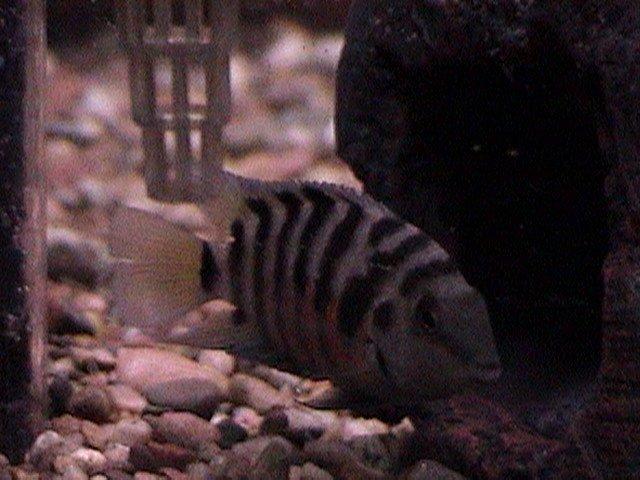 fish pics 002.jpg