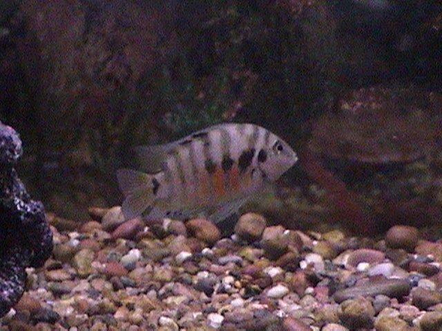 fish pics 004.jpg