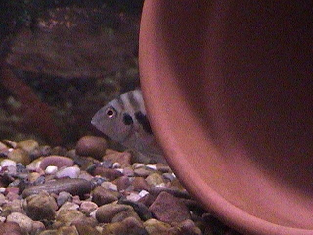 fish pics 005.jpg