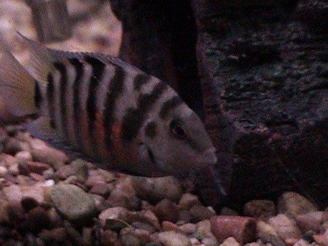 fish pics 006.jpg