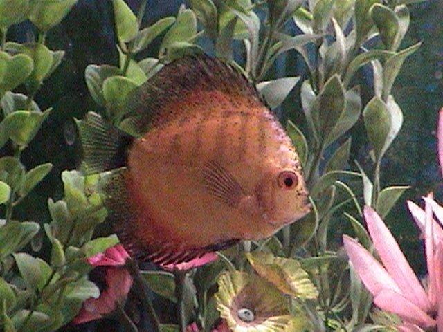fish pics 013.jpg
