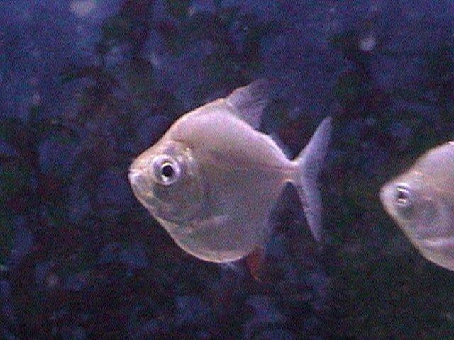 fish pics 001.jpg