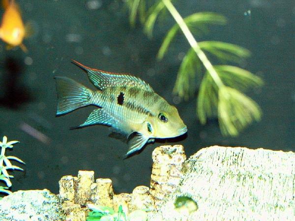 fishroom 006 (2).jpg