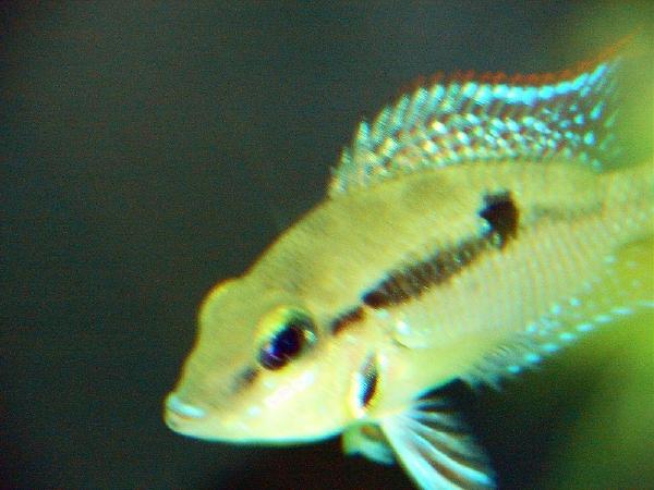 fishroom 007 (2).jpg