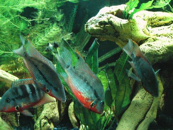 fishroom 017 (2).jpg