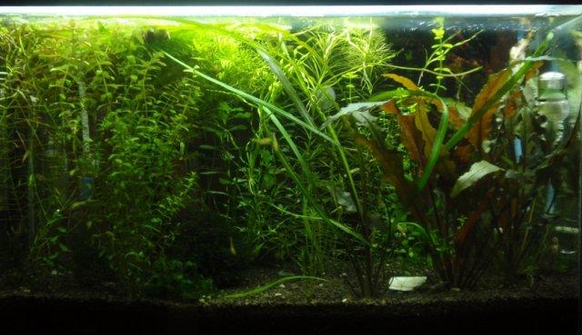 tank_051409.JPG