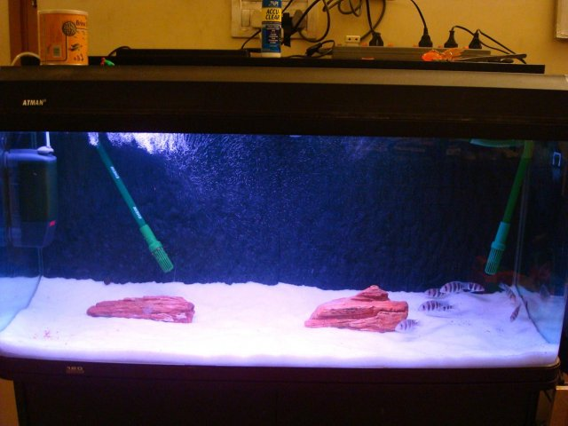 My New Frontosa Tank Setup Kindly Comment Aquariacentralcom