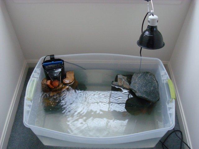 Turtle Tub Aquariacentral Com
