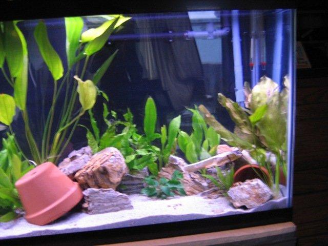 Pics Of Clay Pots In Fish Tanks Aquariacentral Com