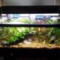 75 gallon glass thickness   AquariaCentral com